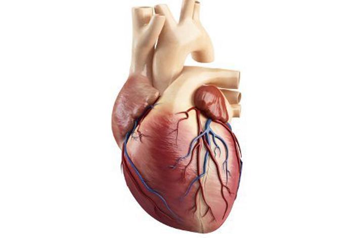 kelainan jantung