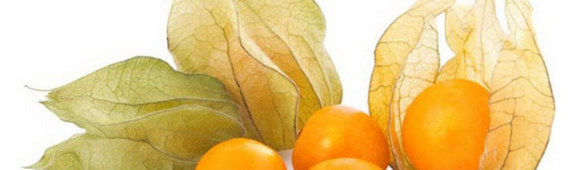 buah ciplukan