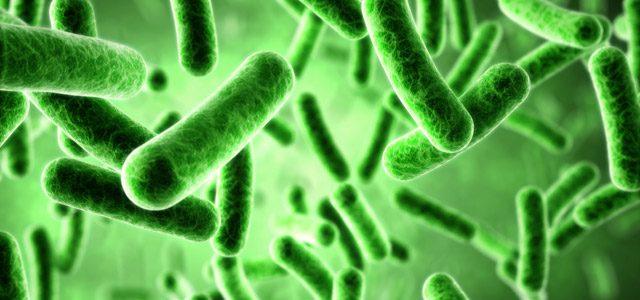jenis-jenis bakteri