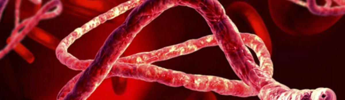 waspada virus ebola